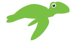 JC Turtles
