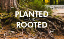 Planted and Rooted, Daniel Ndlovu – Harvest City Church Leicester